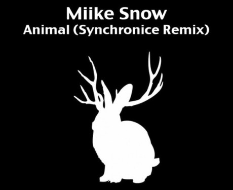 mike snow synch